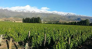 Nevis Bluff Wines