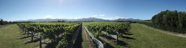 Marlborough Single Vineyards Ltd.