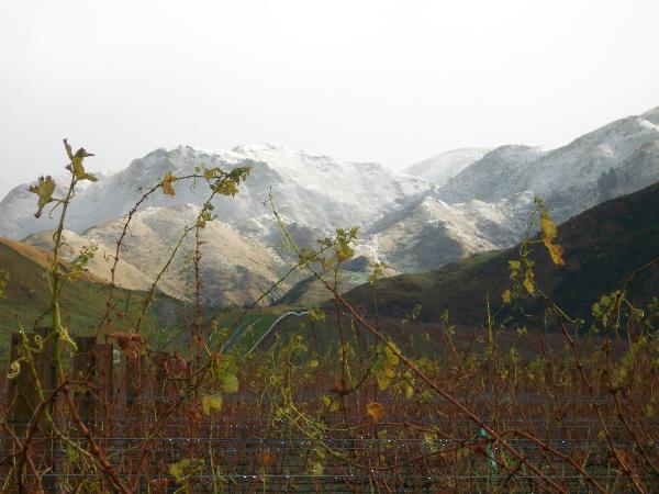Boundary Rider Wines