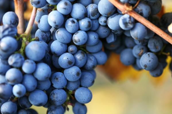 Anthem Wines