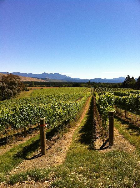 Totara Wines