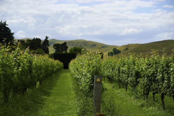 Awanui Wines