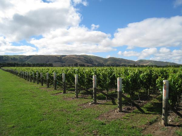 Cobblestone Vineyards