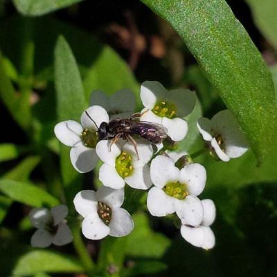Greening Waipara - a collaborative sucess