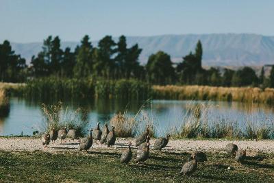 The birds on patrol