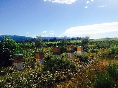 Biodiversity and honey